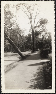 New England Hurricane, 1938. Lake Avenue after hurricane