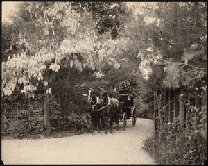 William D. Hunt estate, grounds with horse drawn carriage and driver