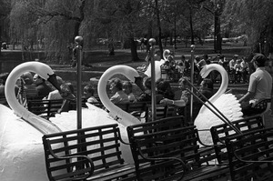 Swan Boats in springtime, Boston Public Garden