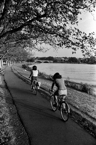 Bicycling by the Charles River. Note Harvard Bridge in background, Cambridge