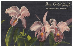 From Orchid Jungle, Homestead, Florida