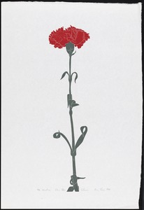 Carnation, Ohio state flower