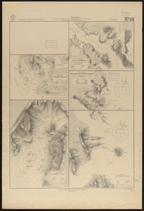 Plans on the west coast of Patagonia, South America