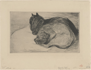 Two sleeping cats