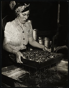 Thelma Hall working mussels in a suet solution.