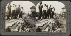 Building dikes to protect the city from the flood, East St. Louis, June, 1903