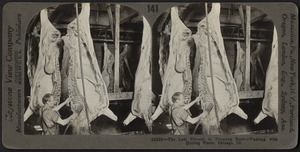The last process in dressing beef, Chicago, Illinois