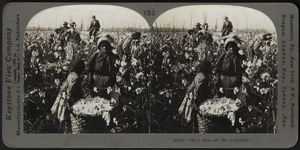 """We'se done all dis's morning',"" -Picking cotton on a Mississippi plantation."