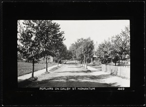 Villages of Newton, MA. Nonantum. Poplar trees, Dalby St.