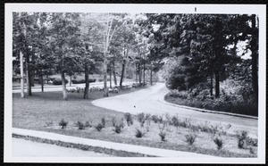 Villages of Newton, MA. West Newton. Waban - after planting