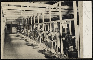 Villages of Newton, MA. West Newton. Interior of barn No. 1 at Wauwinet Farm. Commonwealth Ave. (postcard)