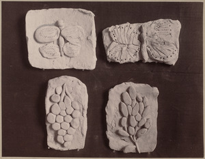 Clay work from the kindergarten. Flattening caused by the packing and not by the children.