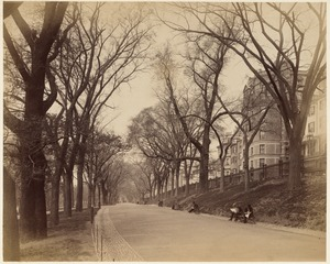 Boston Common, Beacon Street. Lovers walk