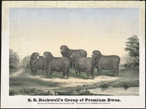 S.S. Rockwell's group of premium ewes, which drew the first prize at the Vermont State Fair in 1864. Bred and owned by S.S. Rockwell, West Cornwall Vt.