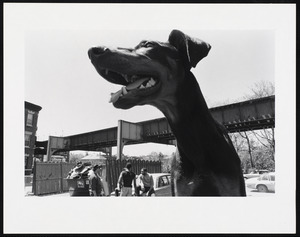 Closeup of dog, elevated tracks in the background