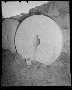 Cat with grinding stone, Henry Ford Grist Mill in Sudbury