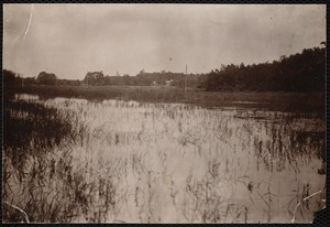 """Distribution Department, Low Service Spot Pond Reservoir, Basket Cove / Morning Meadow (Kingfisher Hill and Basket Cove); verso, """"from boat; shows the poor bushy maples along the shore and the openness of the meadows stretching toward the high road"""", Stoneham, Mass., Jul. 1898"""