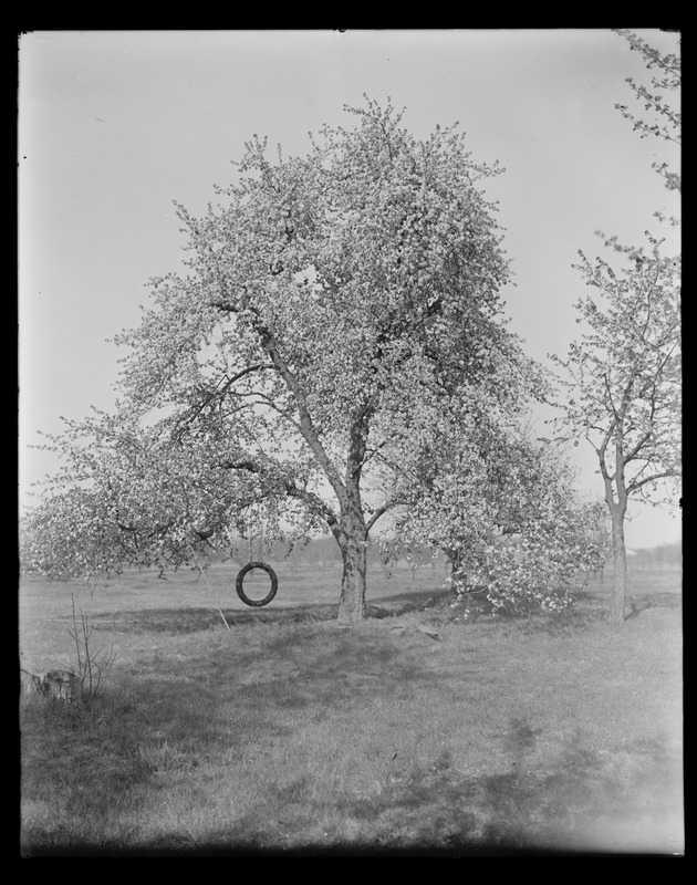 Sudbury Department, tree, with tire swing, with families (13 people), Southborough?, Mass., May 8, 1927