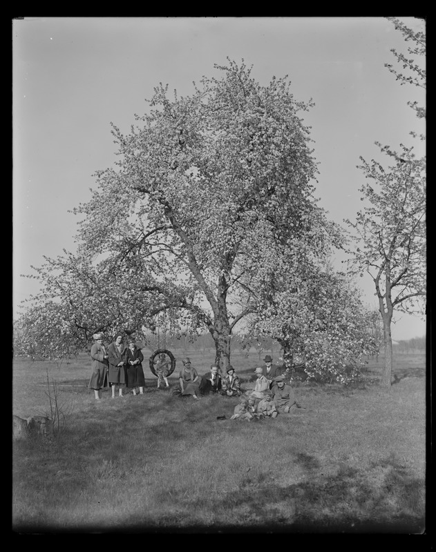 Sudbury Department, tree, with tire swing, Southborough?, Mass., May 8, 1927
