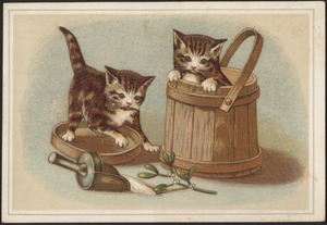 Two cats, one in a bucket and one on the lid