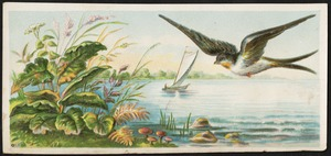 Bird flying over water, plants in the foreground, boats in the background.