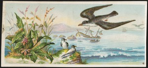 Bird flying over water, plants and sitting bird in the foreground, boats in the background.