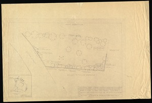 Proposed plant screen, Walter St. cemetery