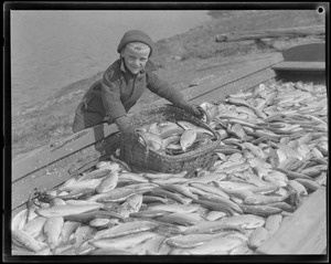 Animals: Boy handles herring at herring run