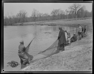 Animals: Herring run in Raynham