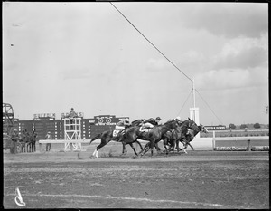 At the finish, race at Suffolk Downs - see racing form