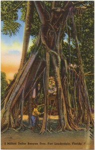2 Million Dollar Banyan Tree, Fort Lauderdale, Florida