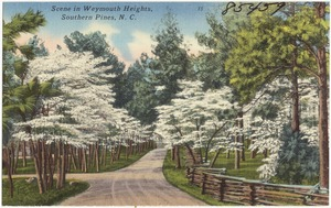 Scene in Weymouth Heights, Southern Pines, N. C.