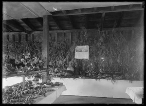 "Interior picture of large plants or trees growing in a kind of box. Marked ""Wayside Farm"""