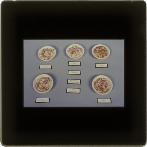 Meal, ready-to-eat, escalloped potatoes w. ham, 6 months, 40˚F, 80˚F, 100˚F, 140˚F, 120˚F