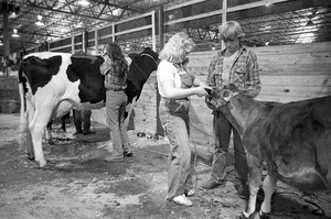 Caring for cows at Eastern States Exposition, Springfield