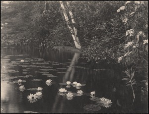 Water lilies in Baldwin's Pond