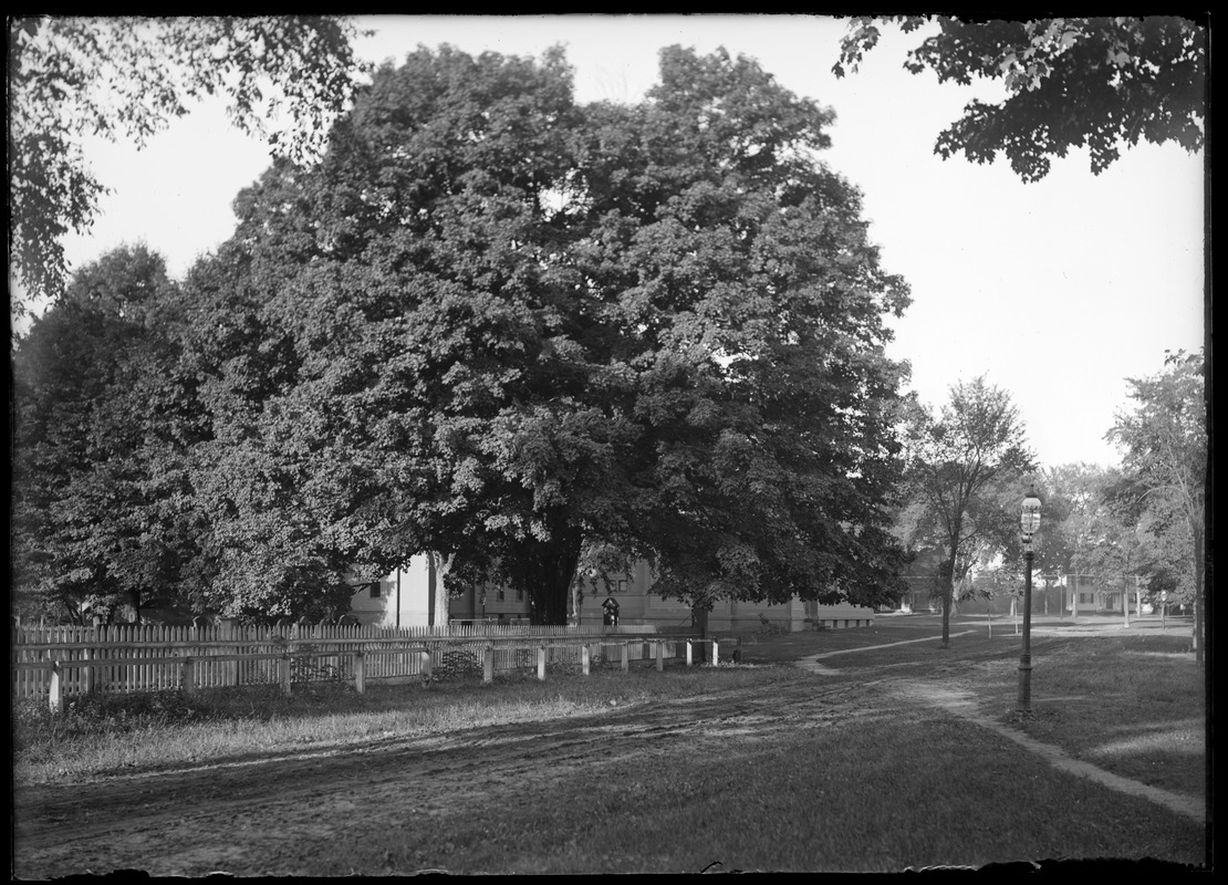 Cemetery gates and maple tree