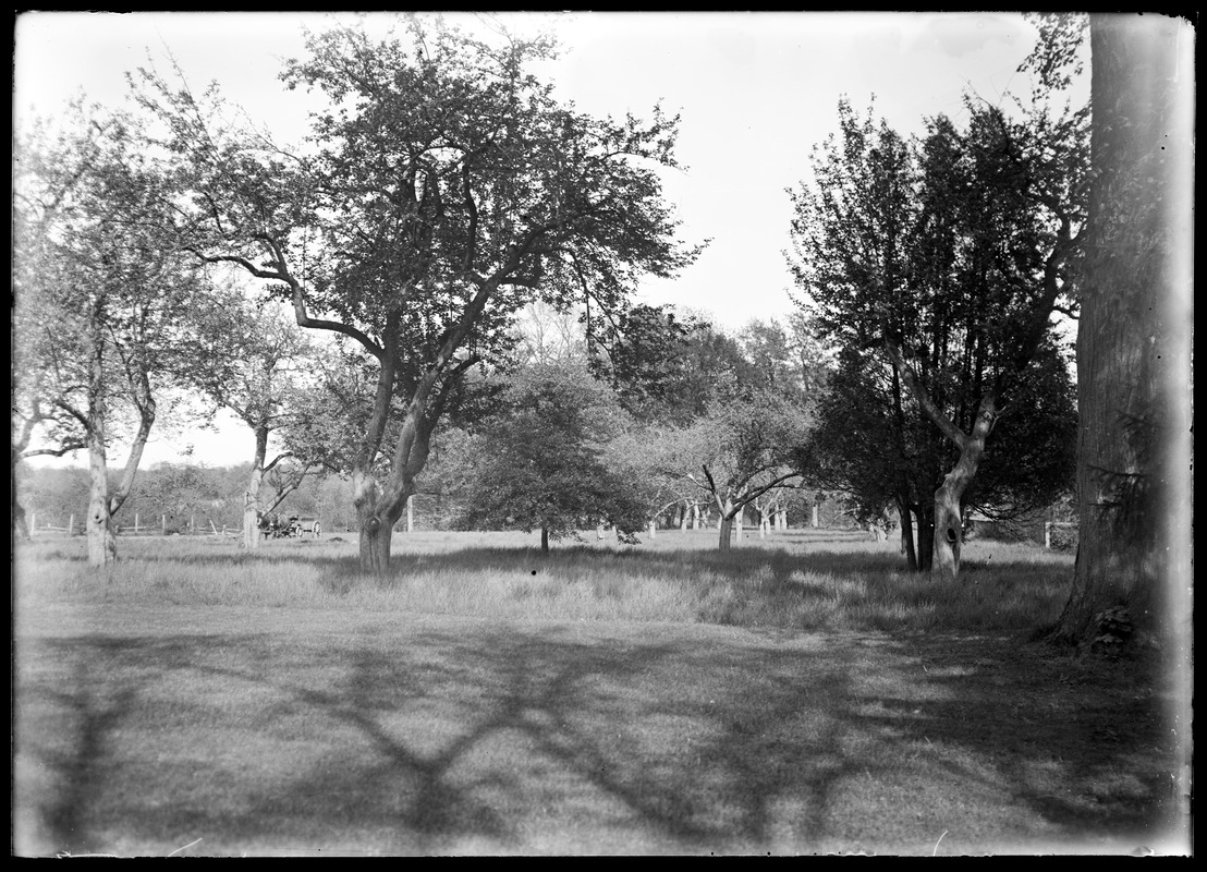Storrs lot orchard preparing for tennis court