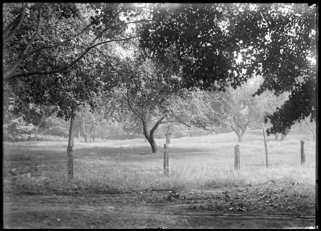 Alvah Colton orchard north of house