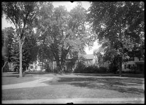 Red house and Elm, 300 years old