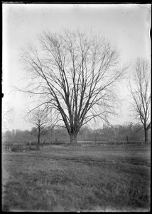 Maple, Meadow Road, east of RR