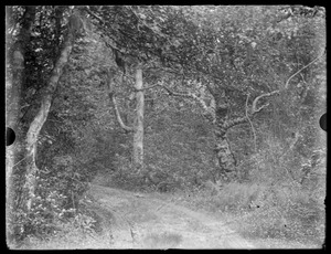 Dirt road going around some trees