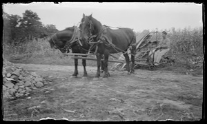 2 horses - cutting corn