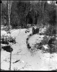 West Milan, N.H., near Berlin, N.H. Logging, Clarks dogs. I climbed to the top of tall tree to get this picture in zero weather on the 20th.