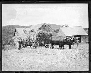 Oxen and wagon