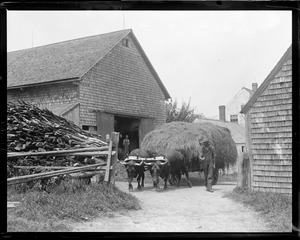 Farming - oxen - hay cart, New Hampshire