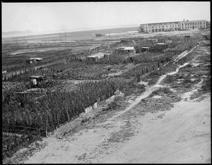 Farms along the track, East Boston