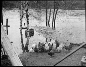 Flood New England