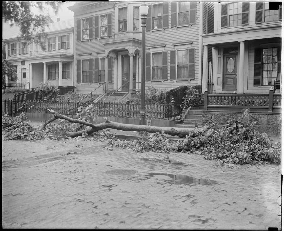 Tree uprooted in storm on West 4th St., South Boston, in front of District Attorney William J. Foley's house, crushing car