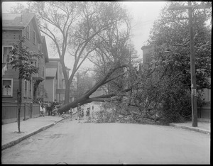 Wind and storm, Cambridge, MA
